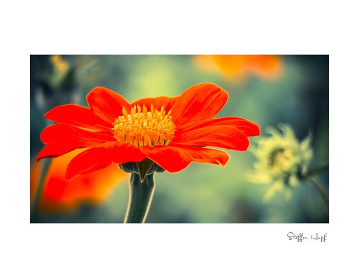 Malerische Gartenpflanzen 05