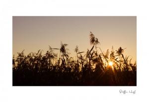 Bild des Tages: Sonnenblick