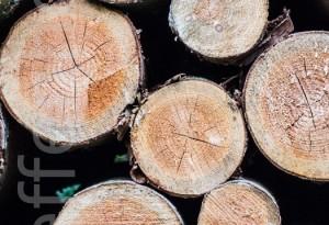 Waldblick - Baumstämme