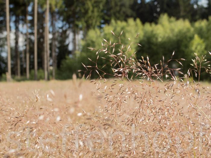 Waldblick - Gräser