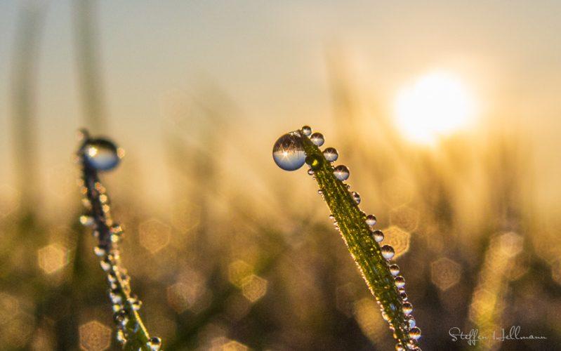 Wassertropfen an einem Grashalm