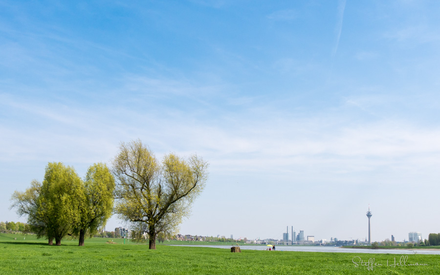 Frühlingserwachen am Rhein
