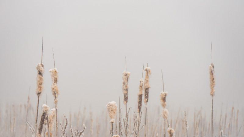 Winterpflanzen I