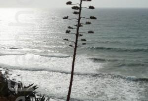 Algarve – Agave