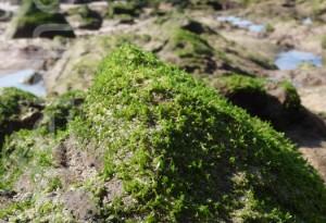 Algarve – Strandflora
