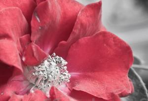 20110513-Blumen-003-3