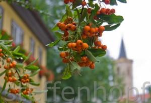 Erfurt - Studentenburse mit Ägidienkirche von Steffen Hopf