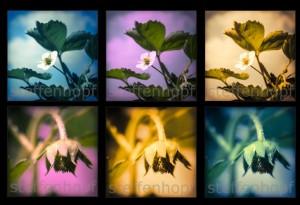 Erdbeerpflanze Retrodesign 01 von Steffen Hopf.