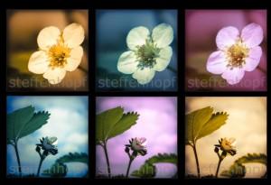 Erdbeerpflanze Retrodesign 02 von Steffen Hopf.
