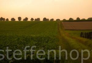 Auf dem Feld - Mangold 04 © Steffen Hopf