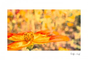 Malerische Gartenpflanzen 01