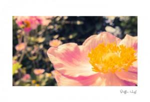 Malerische Gartenpflanzen 02