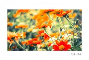 Malerische Gartenpflanzen 03