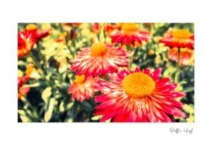 Malerische Gartenpflanzen 04